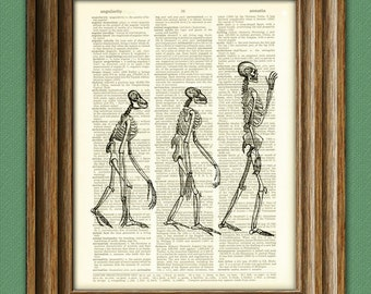 Human Evolution Skeletons awesome upcycled vintage dictionary page book art print