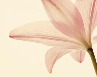 flower pictures, floral prints, blush pink bedroom art, floral nursery art, flower photography, wall art flowers, floral wall art, pink art