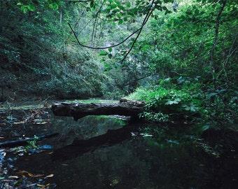 "Landscape Photography, Fine Art, Nature Photography, California, Zen, Santa Cruz - ""Waddell Creek Green"""