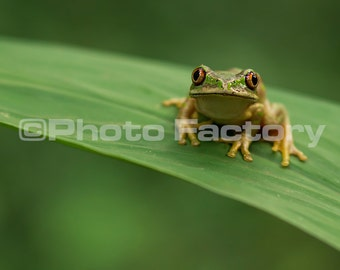 Instant Photography Download,Instant Print, Frog Wall Art,Canvas,Prints,Photography,Instant Frog Print,Digital Frog Download