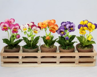 Mini Pansy Flowers