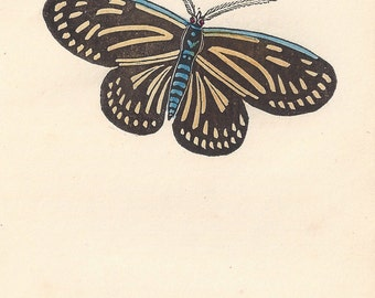The Butterfly Moth. Antique engraving with original hand-colouring, circa 1832