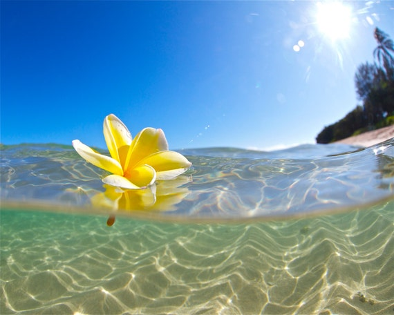 Underwater Hawaiian Plumeria PhotographyYellow Flower