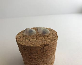 Gray and White Conquina Shell Earrings