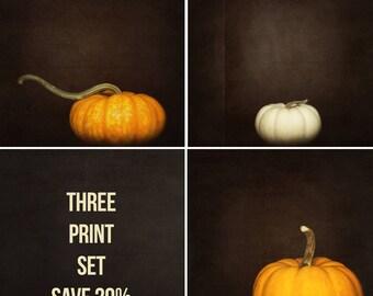 Pumpkin Photography, Nature Print, Holiday Decor, Orange Wall Art - Three Print Set, Artwork for Walls, White Pumpkins, Fine Art, Square Art
