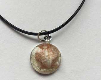 Shell in Sand Necklace