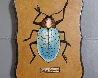 Pleasing Fungus Beetle pyrography wall art