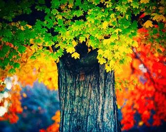 Bridging Seasons - colorful nature landscape - autumn tree - fog photography - fall foliage - decorative print