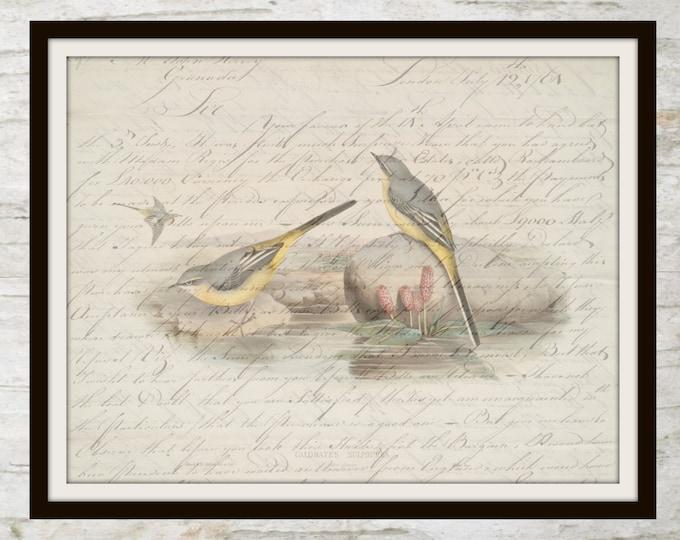 Vintage Bird Art, Script, Instant Download, Birds, Nature, Decor, Printable, Wall Art, JPEG, Home Decor, Design, Instant Graphics