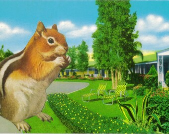 Original Collage Art, Retro Motel Postcard, Squirrel Artwork, Old Motel