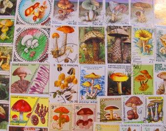 Mushroom Mania 50 Premium Vintage Mycology Postage Stamps Toadstool Fungus Horticulture Shitake Fungi Spore Morel Shroom Topical Philately 2