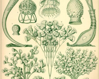 Botanical decor, Nature decor, Nature illustration, Botanical, Nature print, Botanical art, Nature life, 03