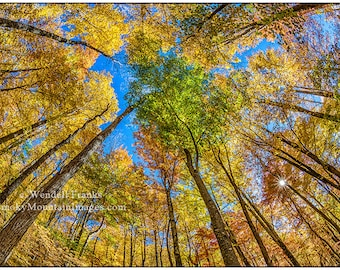 Trees E161