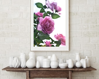 Valentine pink roses, wall art, photography , wall decor