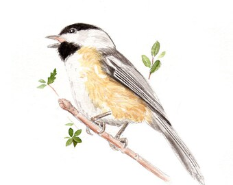 Black Capped Chickadee - Watercolor painting - Archival print - Bird art