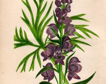 Original 1860 Victorian Flower Plant Print Botanical Chromolithograph Monk's Hood
