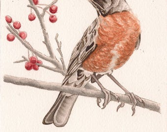 "Robin Bird - Print of Original Art 5"" x 7"" watercolor and ink Giclee archival"