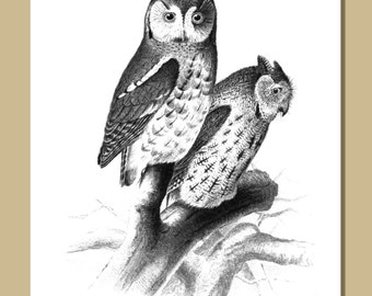 SALE - Set of 10 Owl Notecards With Envelopes - 5 x 7 inches -