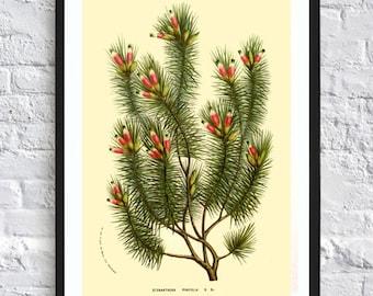 Pine print pine tree printable illustrations vintage antique print tree print wall art print home decor poster green