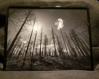Forest fire framed black and white print