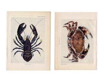 c. 1907 LOBSTER & CRAB prints original antique marine sea life ocean lithographs - set of 2 prints