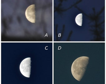 Waning Moon 50%, third quarter moon through trees, silver half moon photograph, night sky, dark blue sky, moon phase photo