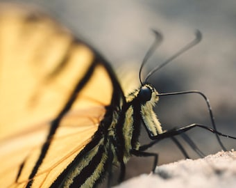 Butterfly Photo Print - Nature Wall Art - Bedroom Wall Decoration - Children's Room Decoration - Butterfly Macro Photo Print - Monarch Decal
