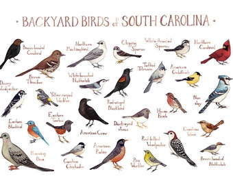 Beau South Carolina Backyard Birds Field Guide Art Print / Watercolor Painting /  Wall Art / Nature