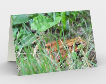 Northern Red-Legged Frog - Pacific Northwest - Set of 3 Blank Cards - Thank You Cards - Greeting Cards - Wildlife Cards - Frog Cards