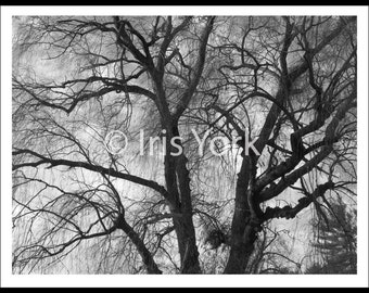 Willow Tree Black and White, Winter, Eerie, Bare Branches, Cloudy Day, Landscape Photography, Nature, Woodstock, Wall Art