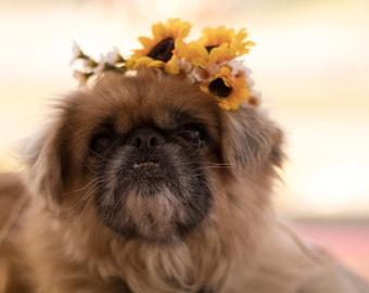Pet accessories dog Flower crown yellow puppy collar bridal wedding hair wreath engagement photo prop puppy halo accessories