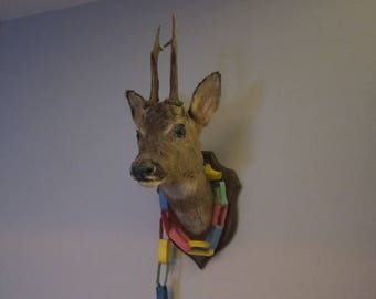 taxidermy deerhead