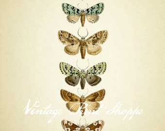Moth wall art Vintage Scientific Illustration reproduction 5x7 print Naturalist decor Home Decor cottage decor Moth Butterfly art print