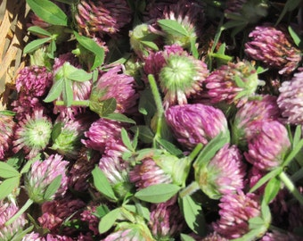 Organic Wild Crafted Red Clover Herbal Tea - Bulk 1 oz - Wild Harvested at Peak for Optimum Nutrients
