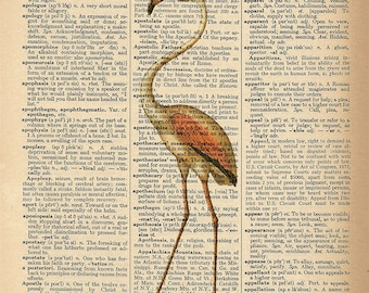 Dictionary Art Print - Flamingo Bird - Upcycled Vintage Dictionary Page Poster Print - Size 8x10