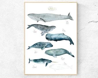 Watercolor Whale, Watercolor Print, Art print, Nursery, Watercolor Art, Art print, Whale illustration, Nursery Art, Art Print, Baby Room