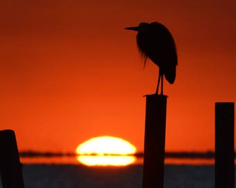Alabama Photography - Mobile Bay Sunset - Bird Photography - Heron Silhouette - Old Pier at sunset - Waterscape - Metal Print