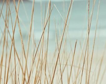 beach grasses photography abstract nautical decor 8x10 8x12 ocean photography fine art beach grass mint pastel wall art coastal decor dunes