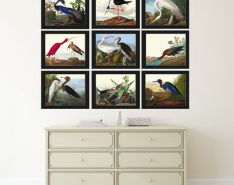 Bird Print Set of 9 Beautiful Antique Audubon Blue Crane White Scarlet Ibis Purple Heron Lake Illustration Picture Home Room Wall Decor