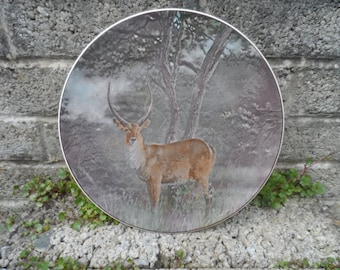 Antique Royal Doulton ceramic charger - vintage ceramic plate - African series 'waterbuck' D6484 doulton wildlife collectors plate