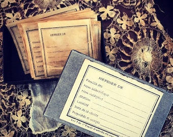 Original Plant specimen label (box)