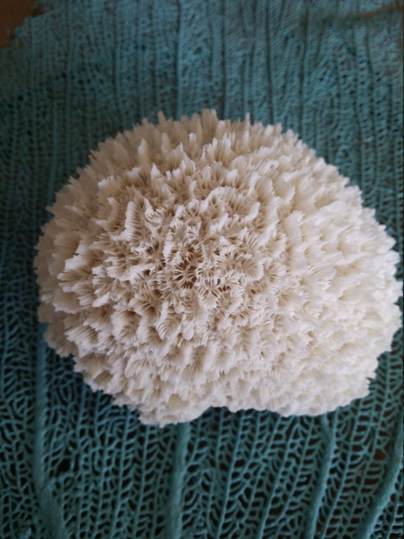 Resin eco friendly faux white brain coral display for coastal