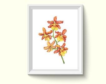 Orchid Flower Watercolor Painting Poster Art Print P454