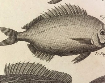 Antique Fish Engraving