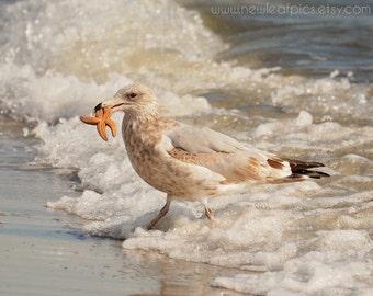 Seagull on Beach, Starfish, beach art, coastal wall art, beach house decor, bird photography 'The Catch'