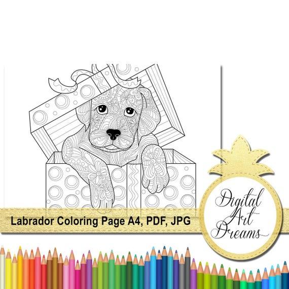 Labrador Retriever Coloring Page Dog Colouring Page