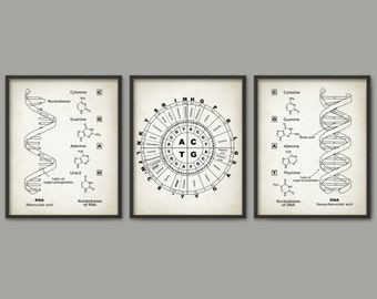 DNA and RNA Genetic Code Print Set Of 3 - Genetics Poster - Molecular Biology - Dorm Decor - Science Student Gift Idea - Biochemistry Poster