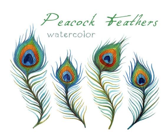 feather clip art digital feather digital clipart peacock rh etsy com peacock feather clip art free download peacock feather border clipart
