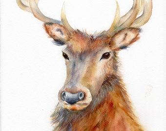 PROUD STAG, Fine Art Giclee Watercolour Prints. Wildlife, Deer Wall Art