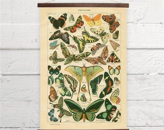 Vintage Butterflies Larousse Natural History Canvas Poster Print Wooden  Wall Chart Sizes A3 A2